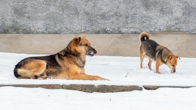 雪の中の冬の大小の犬、農場の犬