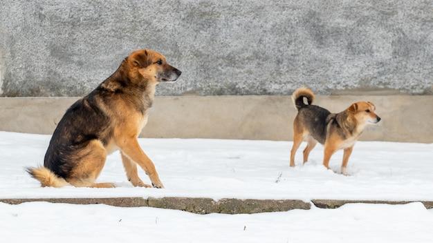 雪の中で冬の大小の犬