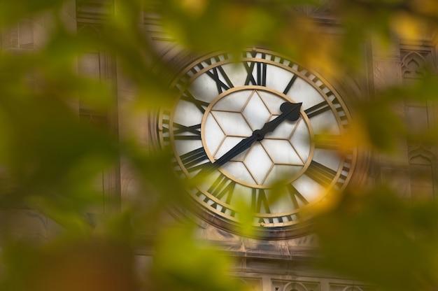 Big antique clock behind tree leaves foreground