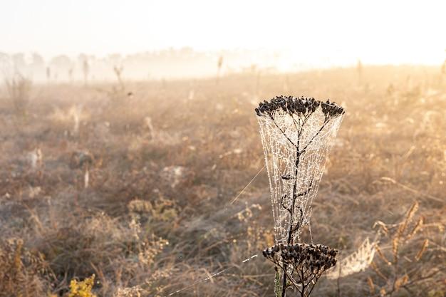 Большая красивая паутина в каплях росы на рассвете в поле.