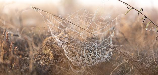 夜明けに野原に露が降り注ぐ大きな美しい蜘蛛の巣。