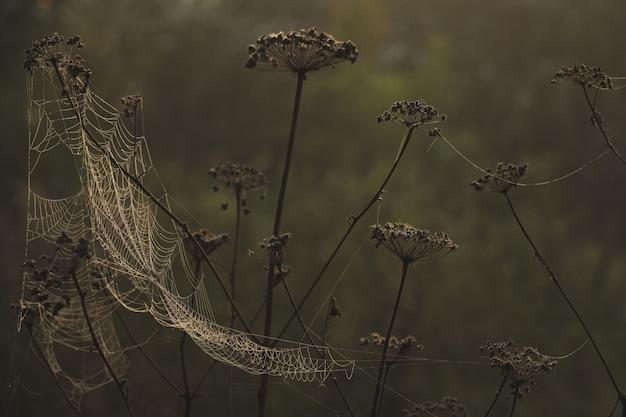 해가 없는 이른 아침에 이슬이 맺힌 크고 아름다운 거미줄
