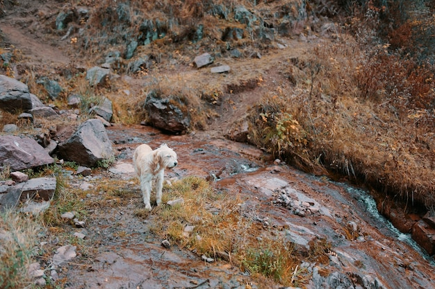 Большая бежевая собака на природе у горной реки собака-поводырь ведет туристов по красивым местам
