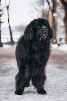 Большая черная собака снаружи в парке