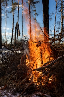 Big bonfires or campfire burning in the winter forest on sunny day. fire in nature.