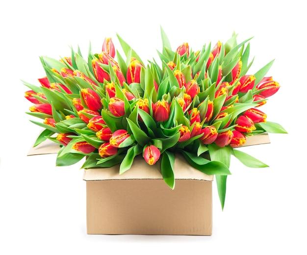 Большой букет красных тюльпанов в корзине на белом фоне