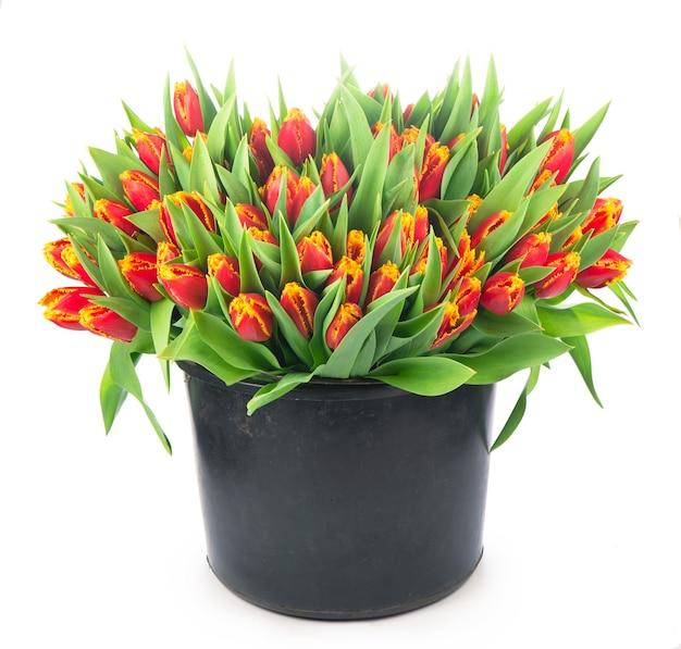 白い表面のバスケットに赤いチューリップの大きな花束