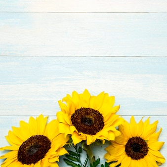 Big bright sunflowers on light blue surface