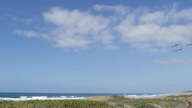 큰 갈색 펠리컨 비행, 태평양 연안의 푸른 하늘, encinitas california usa. 바다 해변 위로 치솟는 큰 새들. 바다 해안 위의 pelecanus의 무리입니다. 해안 야생 동물, 공중에서 날개를 퍼덕이는 동물