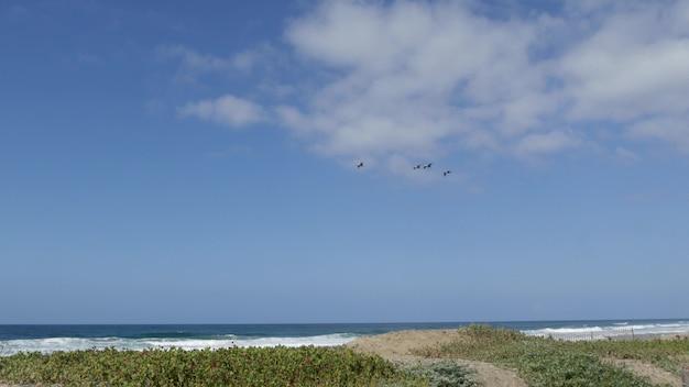푸른 하늘, 캘리포니아 해안, 미국에서 비행하는 큰 갈색 펠리 칸. 바다 해변 위로 날아 오르는 큰 새들. 바다 해안 위의 pelecanus의 무리. 해안 야생 동물, 공기 중의 동물