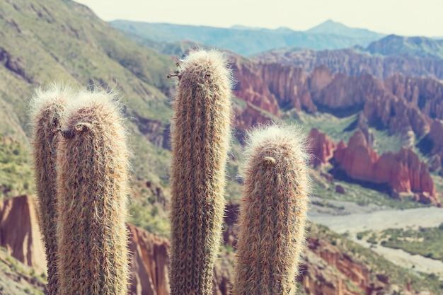 Большой кактус на острове инкауаси, солончак салар де уюни, альтиплано, боливия. необычные природные пейзажи безлюдных солнечных путешествий по южной америке
