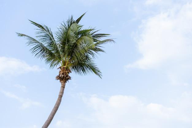 Big coconut tree on blue sky
