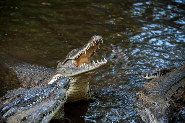 Большой крокодил в национальном парке кении, африка