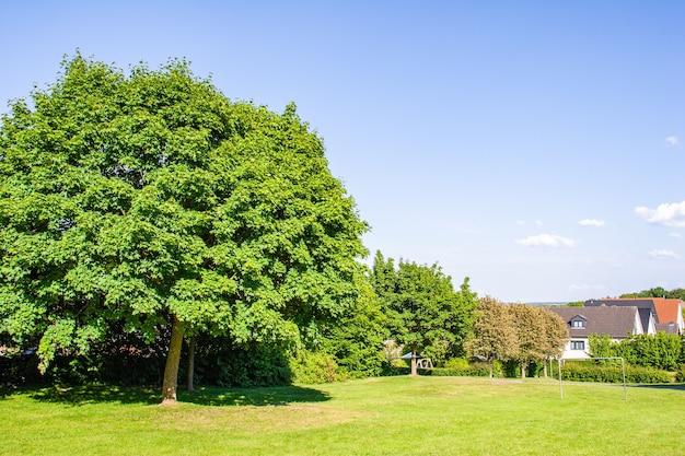 Видны большие густые деревья в ряду и несколько домов