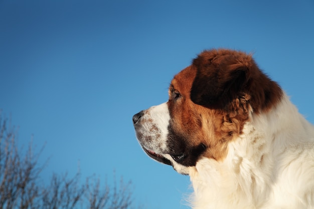 Большая собака на фоне голубого неба