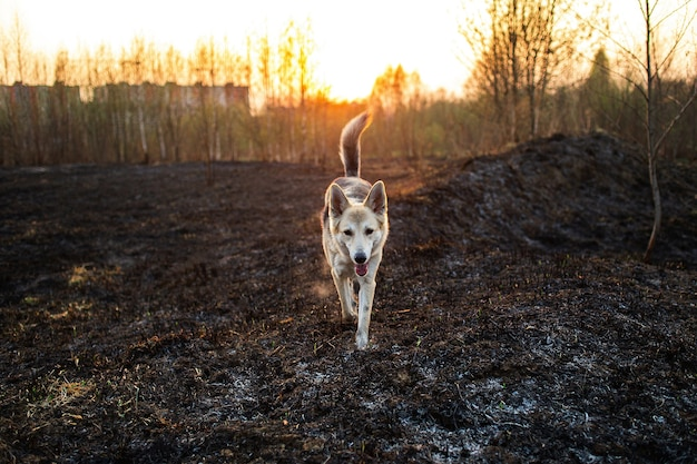 Большая собака, бегущая на лугу в сельской местности