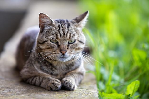 Big domestic cat enjoying warm summer weather.