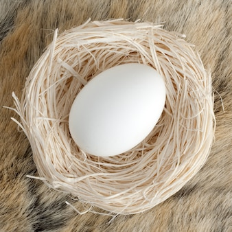 Big egg in small nest