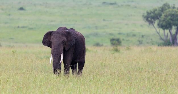 大きな象が草の中に立っています。