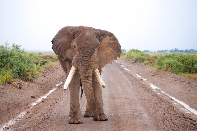 Большой слон стоит на дороге на сафари