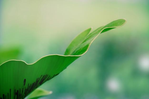 大きなシダの葉のクローズアップ