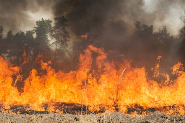Большой пожар на сельскохозяйственной земле возле леса