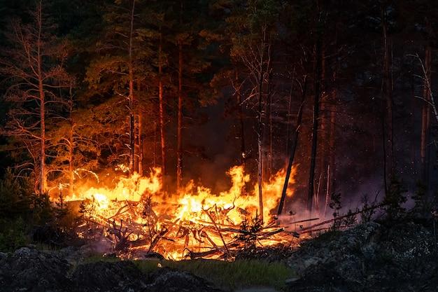 Большое пламя лесных пожаров ночью. сильное пламя от сильного лесного пожара