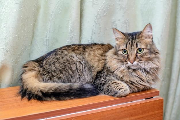 Большой пушистый кот импозантно лежит на столе