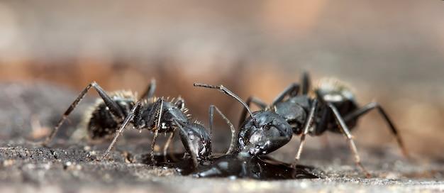 原生生息地の大きな森のアリ