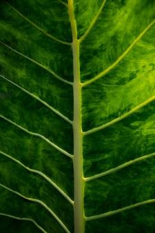 Большие свежие зеленые лист как предпосылка.