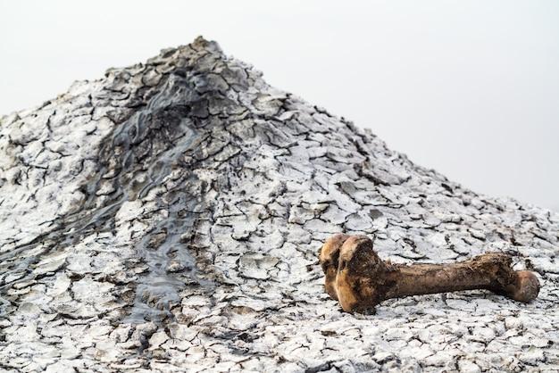 泥火山の近くの大きなかじった動物の骨