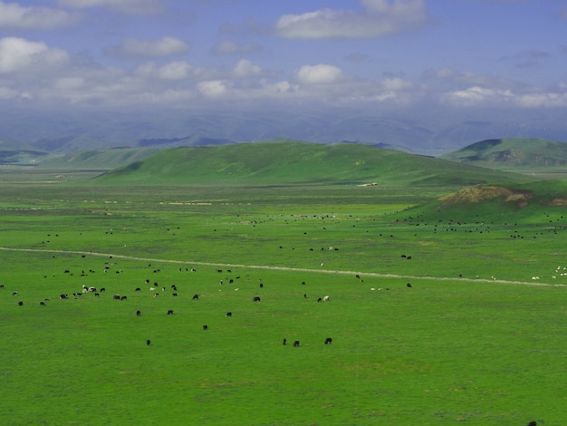 Big grass mountain