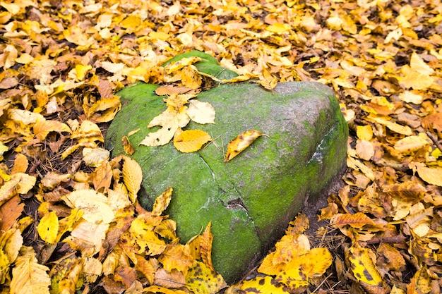 떨어진 단풍으로 덮여 큰 회색 돌