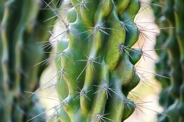 Big green cactus with thorns outdoor in desert.