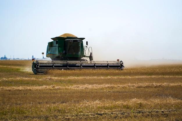 熟した乾燥したヒマワリを刈るヒマワリ畑で働く大きな緑のコンバインハーベスターマシン...