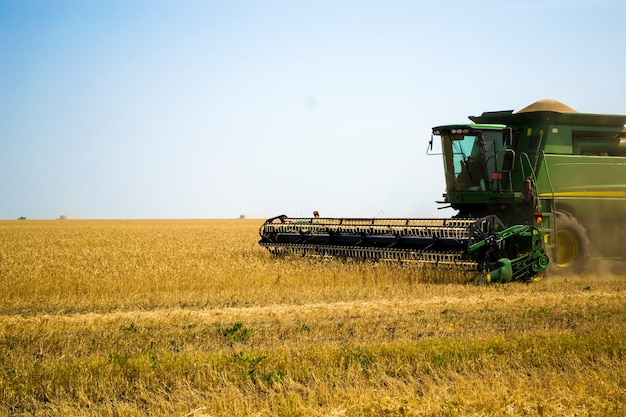 Big green combine harvester machine working in a sunflower field mowing ripe dried sunflowers the wo...