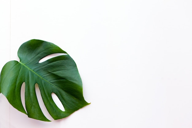 Big green leaf flower arrangement monstera leaf popular choice of florist using exotic jungle plant
