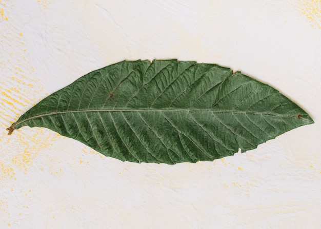 Big green leaf on light table