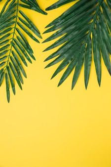Big green leaves on yellow background