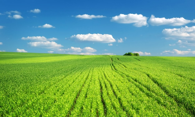 Big green meadow