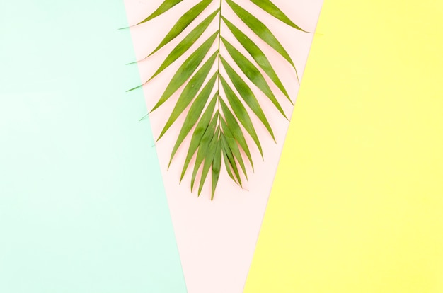 Big green palm leaf on table