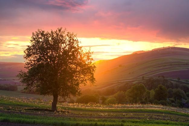 Большое зеленое дерево, растущее в одиночку в весеннем поле на закате.