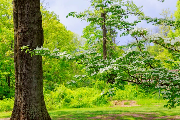 Under big green tree. nature composition.