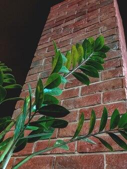 벽돌 벽 배경 하단 뷰 카페 룸 인테리어에 큰 녹색 zamioculcas