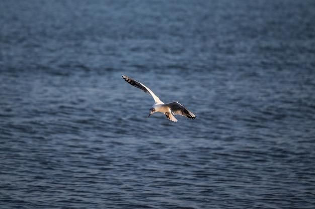 Большая чайка пролетает над морем в дневное время