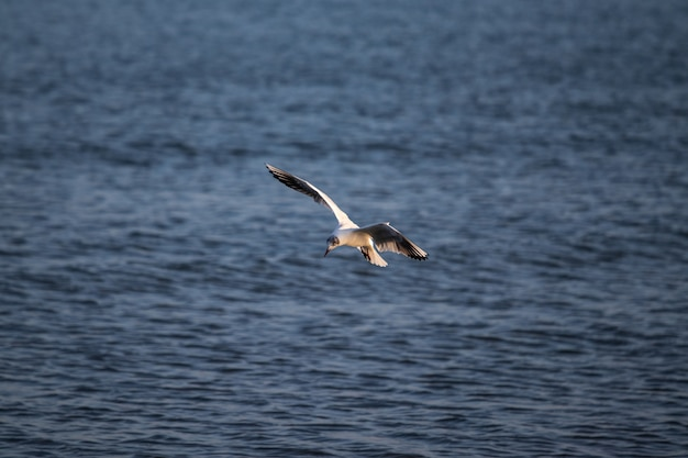 Big gull flying over the sea during daytime