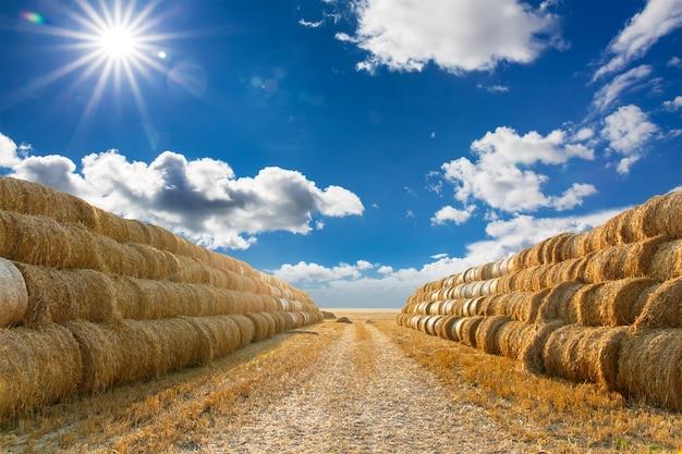 Big haystack at field