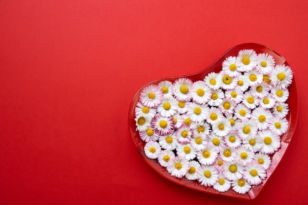 Big heart from daisy flowers on red background. copy space, top view. holiday background.