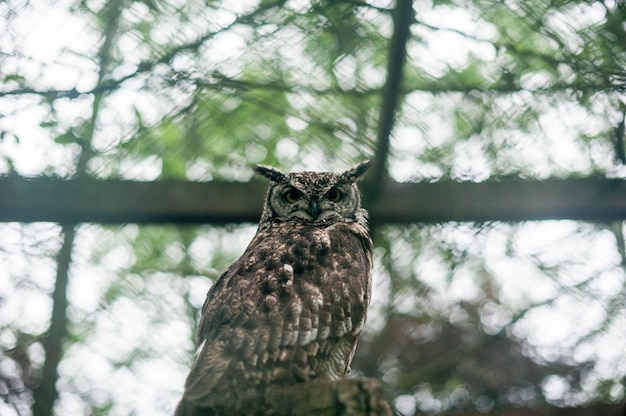 Big horned owl on a branch.