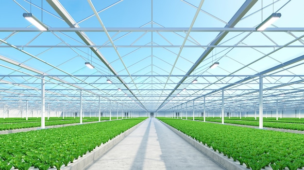 Интерьер большой промышленной теплицы. завод по производству гидропоники комнатных овощей. ферма зеленых салатов. бетонный пол. 3d визуализация